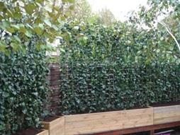 School Green Screen in the London Borough of Haringey